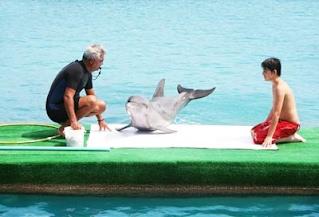 Delfines Isla Palma